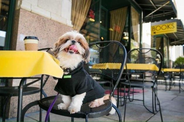 Asheville - pet friendly