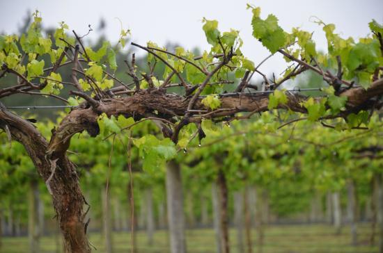 lu-mil-vineyard